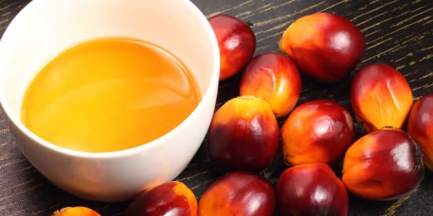 Olio di Palma: l'Ue adotta un limite ai contaminanti cancerogeni