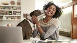 Falar com voz de bebê vai te aproximar do seu cachorrinho já adulto, diz