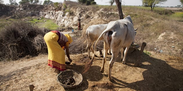 An Indian woman collecting cows manure to use as a fertiliser or combustible. (Photo by: Loop Images/UIG via Getty Images)