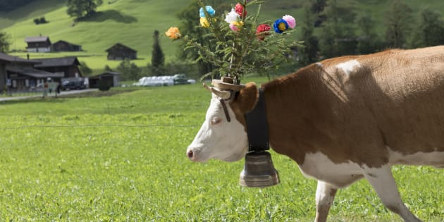 La seule chose que le maire et l'agriculteur visé par la pétition ont concédé est promettre de déplacer l'abreuvoir pour limiter le déplacement des vaches, et le bruit qui va avec.