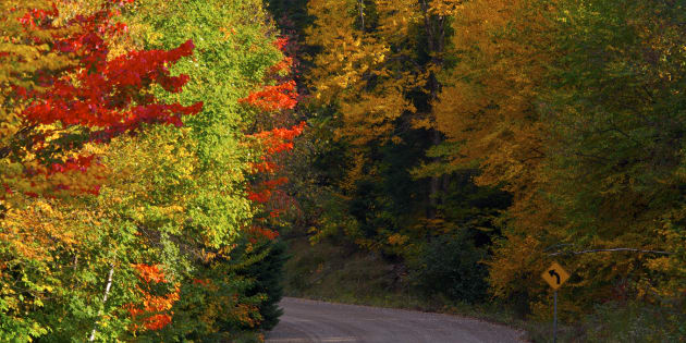 Fall colours along Highway 2 through Parc national du Mont Tremblant in Quebec.