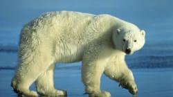 Un habitant du Nunavut meurt en protégeant ses enfants d'un ours