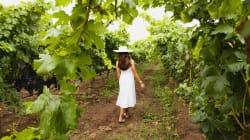 Un recorrido por los vinos de Guanajuato (te recomendamos