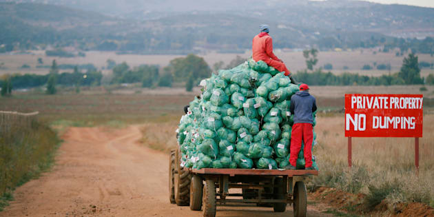 Farm workers harvest cabbages at a farm in Eikenhof, near Johannesburg.