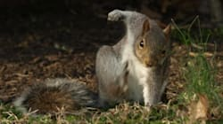 Cet écureuil vraiment badass vaut le