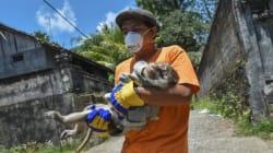 Voluntarios arriesgan su vida con tal de salvar animales amenazados por volcán en