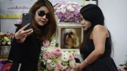 FOTOS: Así son los funerales budistas para mascotas en
