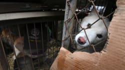 Por fin, Corea del Sur cerró el matadero más grande para obtener carne de