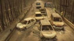 Il bosco portoghese raso al suolo dall'incendio nelle impressionanti immagini riprese dal