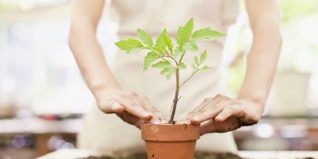 Como trocar a planta de vaso sem danificá-la