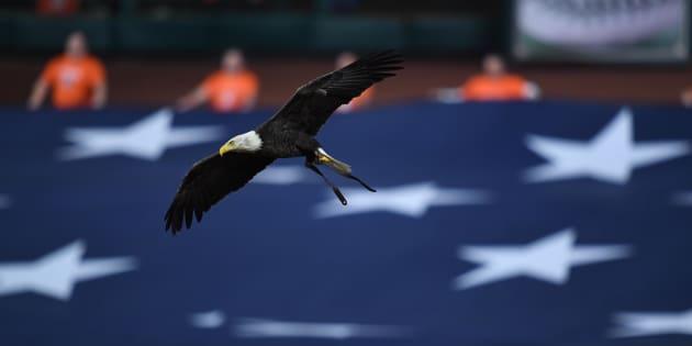 """Le """"bald eagles"""", emblème des Etats-Unis, faisait partie des espèces menacés d'extinction qui a pu être protégé grâce au """"Endangered Species Act"""""""