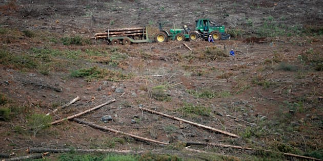 Workers rest near a tractor collecting timber in Howick, KwaZulu-Natal Province, South Africa March 9, 2018.