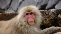 放射線被ばくが野生動物に与える影響調査についての関連5学会合同要望書