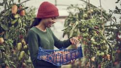 BLOGUE Pas besoin d'une politique alimentaire au Canada: laissons l'innovation se