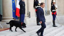 """フランスの""""ファーストドッグ""""は元・保護犬。マクロン大統領、黒い雑種犬「ネモ」を官邸に引き取る"""