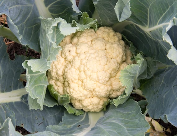 Farm connected to E. coli scare recalls cauliflower