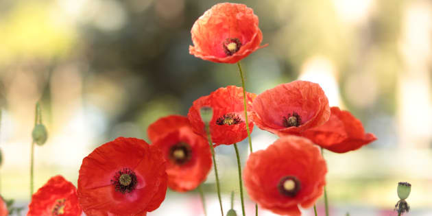 Why do we need to cut those tall poppies down?