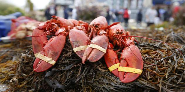 Nel Maine un ristorante stordisce le aragoste con la marijua