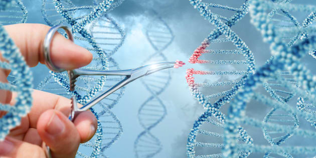 Oubliez la PMA, voici le débat à surveiller des États généraux de la bioéthique