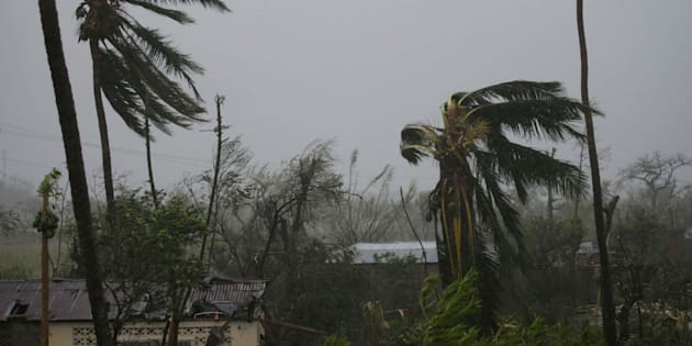 Trees damaged by wind are seen during Hurricane Matthew in Les Cayes, Haiti, October 4, 2016. REUTERS/Andres Martinez Casares
