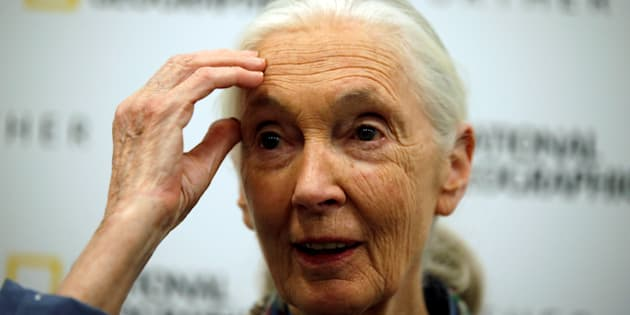 Conservationist and primatologist Jane Goodall speaks during a news conference at the National Geographic summit in Lisbon, Portugal May 25, 2017. REUTERS/Rafael Marchante