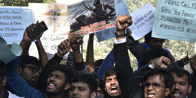 Jallikattu supporters during the protest March against Jallikattu ban at Jantar-Mantar on January 19, 2017 in New Delhi, India.