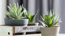 5 Plants That Are As Well-Suited To Apartment Living As You