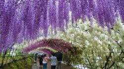FOTOS: Japón se convierte en el lugar más hermoso del