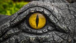Un crocodile avec un pneu autour du cou risque