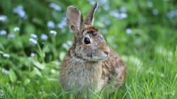 増殖した野生ウサギをウイルスで駆除へ ニュージーランドが農業被害に対抗策