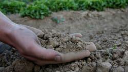 BLOG - Comment sortir notre agriculture de la