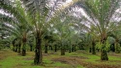 小売・食品業界に広がるパーム油の持続可能な調達
