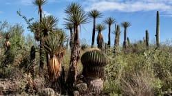 📷 Este es el nuevo lugar de México declarado Patrimonio de la