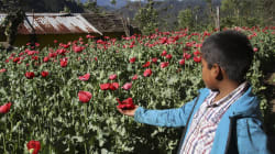 En Guerrero aprueban iniciativa para la legalización de la