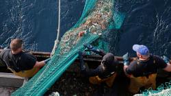 Comment éviter qu'un no deal mette les pêcheurs au chômage technique dans 15