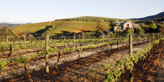 Tokara Wine Estate.