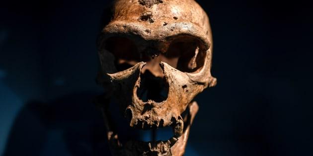 Un cráneo de la exposición sobre Neandertales en el Musee de l'Homme de Paris.