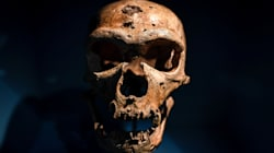Descubierta la primera hija de dos especies humanas diferentes, neandertal y