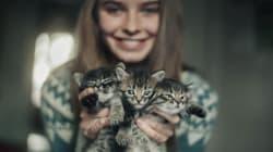 A.A.A. Cercasi accarezzatore di gatti professionista per un compenso di 25mila euro
