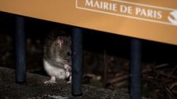 France: Anne Hidalgo réagit à la vidéo virale sur les rats dans une poubelle