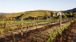 Three SA Wines Voted 'World's Most Admired