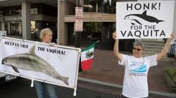 Juez ordena a EU embargo pesquero contra México por vaquita