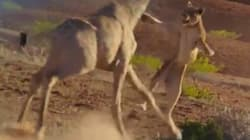 Les images époustouflantes du documentaire animalier qui a battu Harry Potter à la