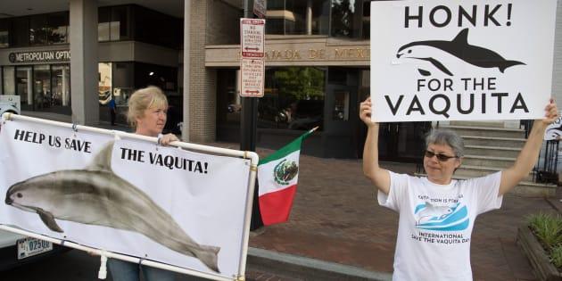 Manifestantes de The Animal Welfare Institute durante una protesta frente a la embajada de México en Washington, DC, el pasado 5 de julio de 2018. Exigían la preservación de la vaquita marina en México.