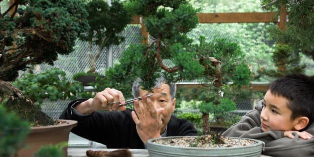 O objetivo do bonsai é criar uma representação realistada natureza na forma de uma árvore em miniatura.