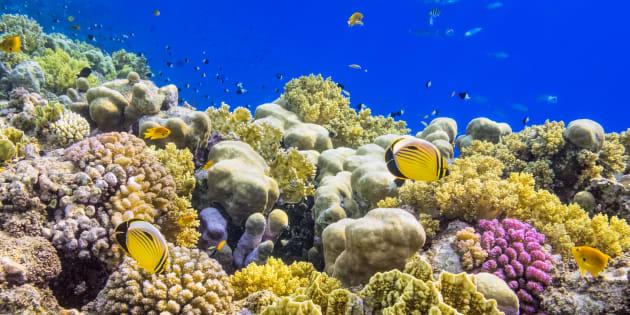 3 raisons qui devraient nous convaincre de tout faire pour préserver les coraux.