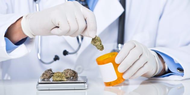 Cannabis à usage médical: des élus de gauche et LREM et des médecins appellent à la légalisation