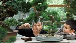 Bonsai: A técnica oriental milenar de cultivar