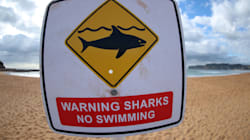 Un grand requin blanc attaque un pêcheur au harpon près de Pebble Beach en