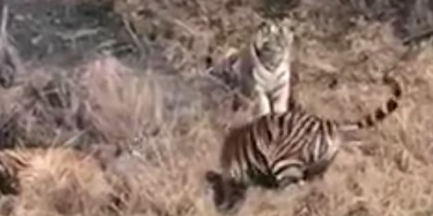 Mobile phone footage of the attack was shot by other zoo visitors